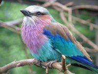 BirdworldV2.JPG