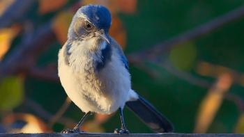 Our Favourites - Bird World